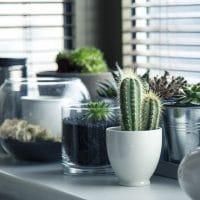 Quelle plante pour l'intérieur de la maison ?